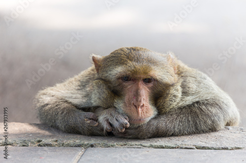 Photo mother monkey on the side walk