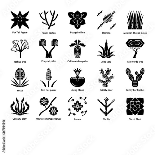 Desert plants glyph icons set - Buy this stock vector and