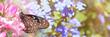 canvas print picture - Tropischer Schmetterling in Rosa Blüten bei Sonnenschein