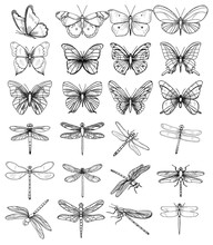 Isolated, Set Of Sketches Of Butterflies And Dragonflies On A White Background