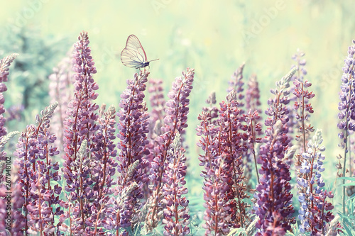 Tuinposter Londen butterfly on a flower spring or summer background / nature flowers abstract summer warm toning