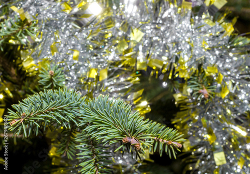 Photo Stands Roe Branch spruce close up