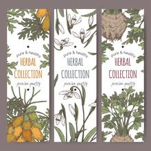 Three Color Labels With Apium Graveolens Aka Celery, Carica Papaya Aka Papaya, Galanthus Nivalis Aka Snowdrop Sketch.