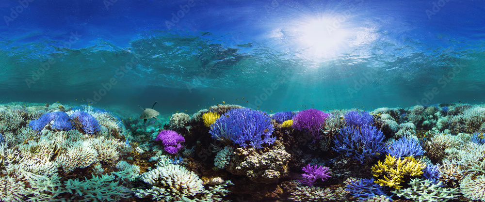Fototapety, obrazy: Glowing coral reef
