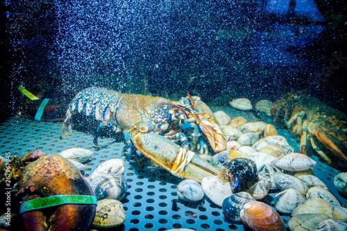 Fotografija  Colorful crawfish for sale, sea crustaceans inside aquarium in a restaurant