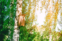 Old Birdhouse On A Birch Among Green Leaves