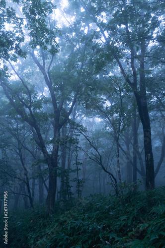 Photo 霧の森