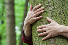 Closeup Of Woman Hugging A Tree In A Forest