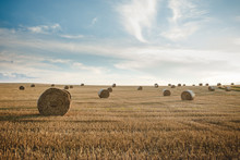 Round Bales Of Hay In A Field ...