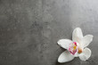 Leinwandbild Motiv Beautiful tropical orchid flower on grey background, top view. Space for text