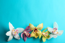 Beautiful Tropical Orchid Flowers On Color Background, Flat Lay. Space For Text
