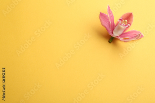 Foto auf Leinwand Orchideen Beautiful tropical orchid flower on color background, top view. Space for text
