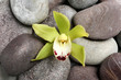 canvas print picture Beautiful orchid flower among spa stones, top view