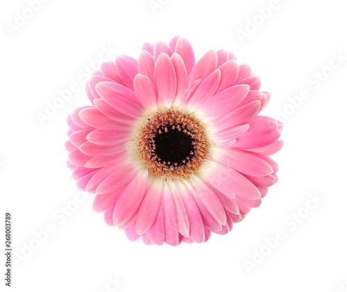 Foto op Aluminium Gerbera Beautiful bright gerbera flower on white background, top view