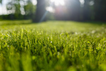 Green Grass Summer Spring Background. Beautiful Forest Background. Bokeh Effect. Close-up Freshness Grass In A Field On Nature In Evening At Sunset. Colorful Artistic Image, Free Copy Space