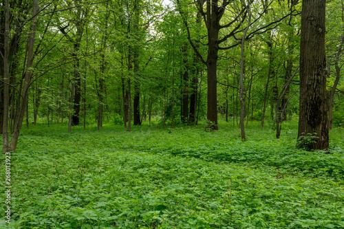Spoed Foto op Canvas Spring Forest.