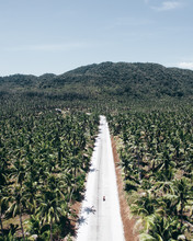 Aerial Photography Of Road Between Coconut Trees
