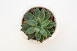 Top view small green echeveria succulent plant isolated on white desk background with copy space. Work table.
