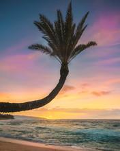 Curved Palm Like Flower