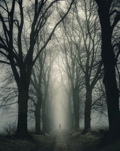 Person Walking On Pathway Inside Forest Surrounded With Trees During Foggy Time