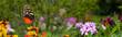 Schmetterling 575