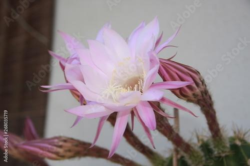 Photo  fiore pianta grassa