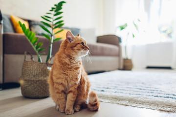 Mačka đumbira koja sjedi na podu u ugodnoj dnevnoj sobi. Unutarnji dekor