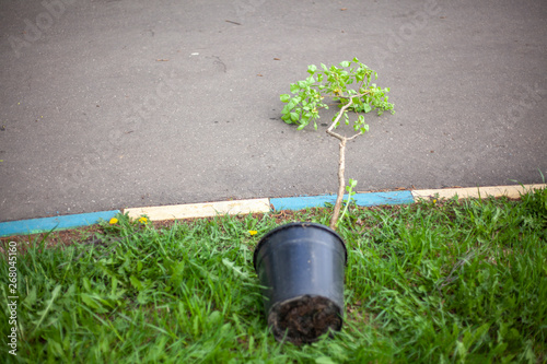 Plant saplings for the garden  Planting plants in the spring