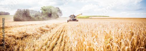 Fotografia  Combine harvester harvests ripe wheat. agriculture
