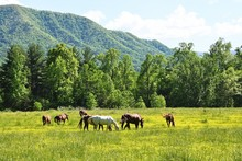 Horses And Mountain