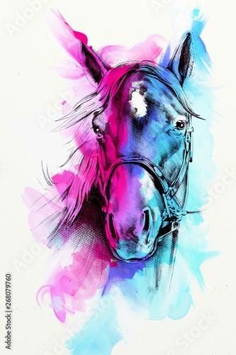 Fototapeta Original oil painting of a fine arabian horse obraz
