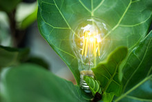 A Light Bulb Is Growing On Green Leaves For Environment Renewable To Energy Saving In The Future. Eco Friendly Concept. Energy Development Design
