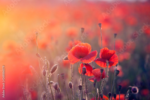Montage in der Fensternische Mohn Poppy field