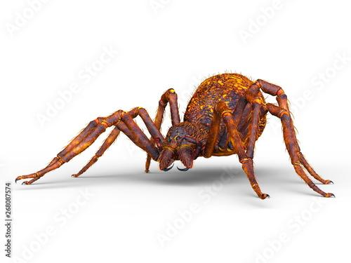 Fotografiet 蜘蛛