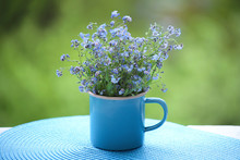 Wild Blue Flowers In Cup.  Myosotis Are Called Forget-me-not Or Scorpion Grasses.