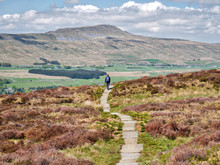 A Lone Walker On A Stone Path, Heading To Chapel-le-Dale And Whernside In The Yorkshire Dales In The UK