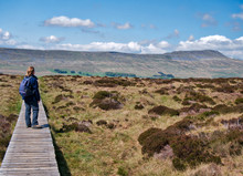 A Lone Walker Looks Across To Whernside From A Boardwalk Across Marsh Below Souther Scales Fell In The Yorkshire Dales In The UK