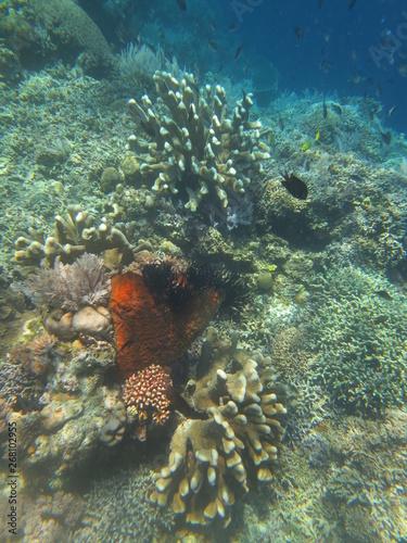 Foto Arrecife de coral