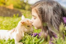 Little Girl Kissing A Goat. Cl...