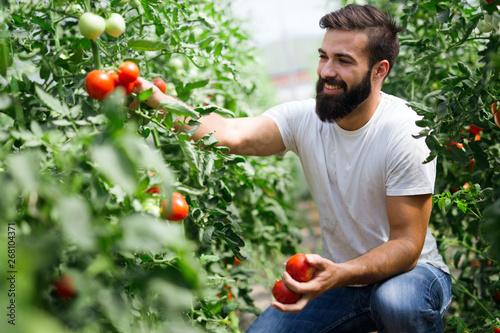 Fototapeta  Attractive happy male farmer working in greenhouse