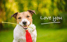 """Lovely Dog With Flower And Red Tie Saying """"I Love You"""""""