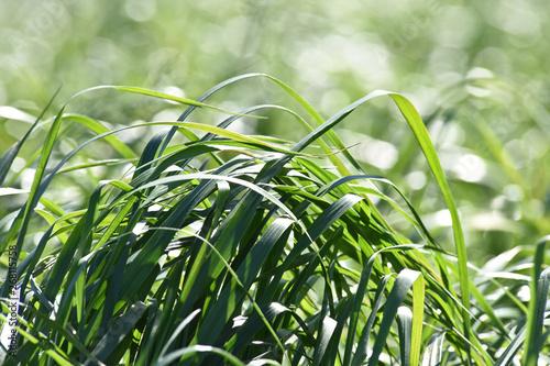 Papiers peints Vert chaux agriculture agricole vert bio environnement terre planete climat climatique rural ruralite campagne paysage Wallonie meteo culture herbe jachere