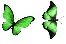 Beautiful Two Green Butterflies Isolated On White Background