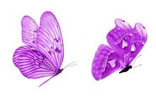 Beautiful Two Purple Butterfli...
