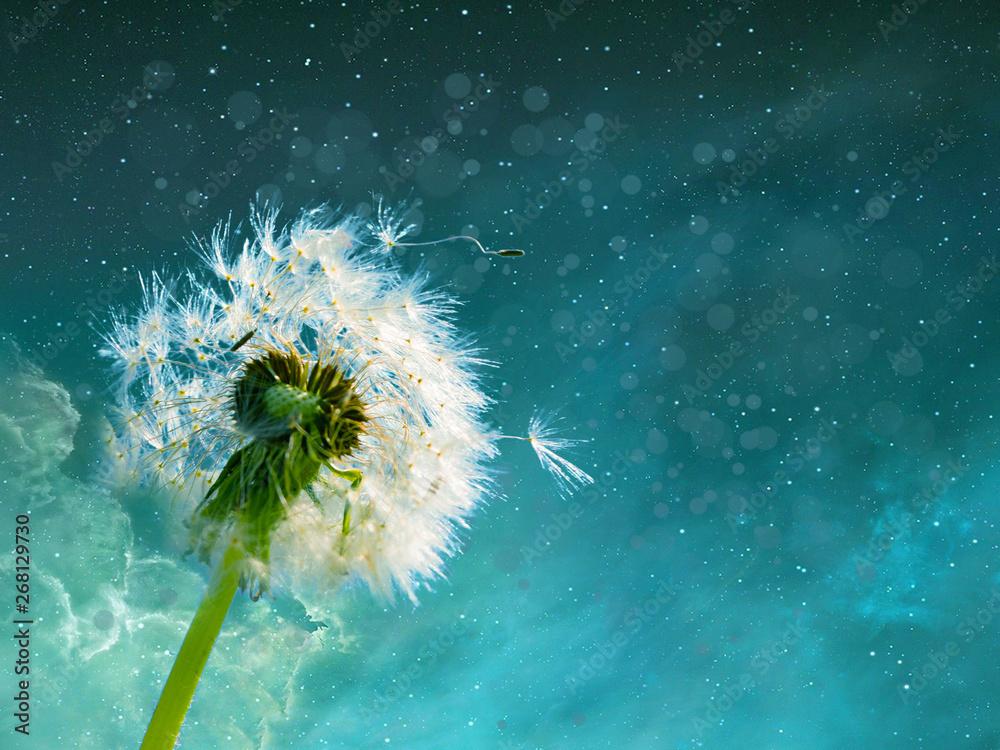 Fototapety, obrazy: dandelions on background of blue sky