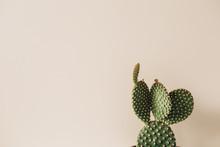 Closeup Of Cactus On Beige Bac...