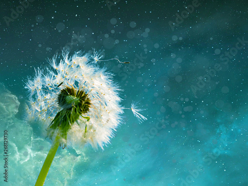 dandelions on background of blue sky