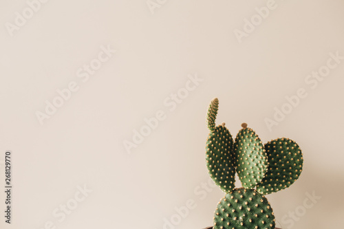 Fotografia Closeup of cactus on beige background