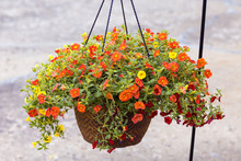 Hanging Basket Full Of Red Yel...