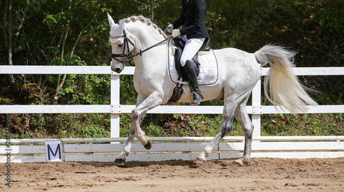 Photo Dressage horse (horse) in the uphill gallop in a dressage tournament